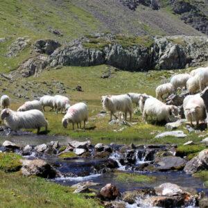 Lettre ouverte de CAP Ours au Préfet coordonnateur du massif Pyrénées